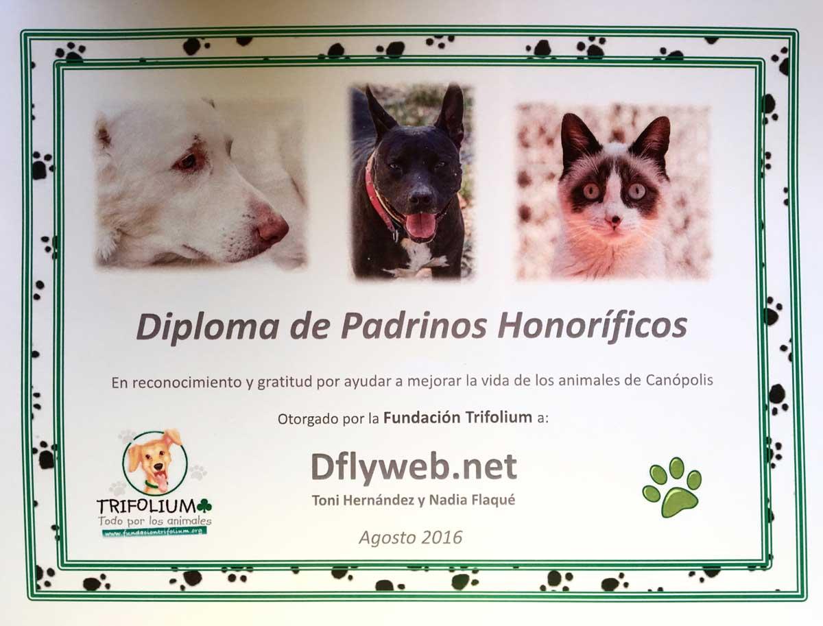 Diseño web y marketing para terapeutas Dflyweb.net Fundacion Trifolium Regalos con Alma